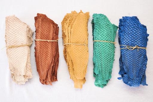 Couro de peixe tilápia colorido.